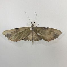Lesley Kendall (@rustlingleaf) • Instagram photos and videos Number Generator, Kendall, Moth, Birds, Photo And Video, Animals, Nature Inspired, Instagram, Videos