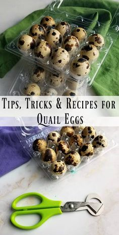If you are looking for great ways to use quail eggs, you have come to the right spot. There are so many great ways to use the cute little eggs in all sorts of appetizers and meals! Here are some tips, tricks and recipes for quail eggs. Quail Recipes, Egg Recipes, One Bite Appetizers, Yummy Appetizers, High Protein Snacks, Prosciutto, Pickled Quail Eggs, Avocado Toast, Ariel