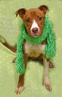 Brownie A032714 on death row at Coweta County shelter. PLEASE SHARE!