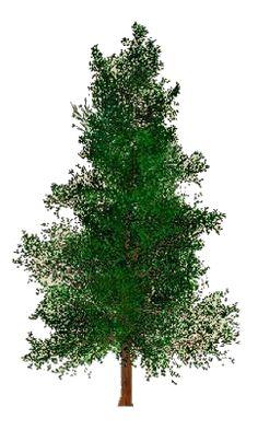 arbres vue de dessus facile utiliser dans vos projets d 39 am nagement paysager banque d 39 images. Black Bedroom Furniture Sets. Home Design Ideas