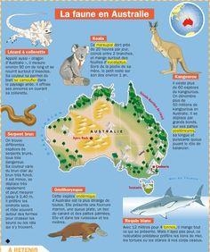 Fiche exposés : La faune en Australie