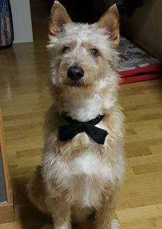 ¿No te parece el perro más molón de Zaragoza? CanFood premia la foto más original con un año de pienso gratis.