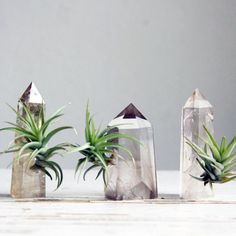 Mounted within a beautiful smoky quartz crystal, this Falcon and Finch planter sports a burst of Tillandsia