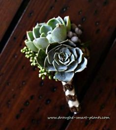 Succulent Wedding Bouquet - flowers that aren't flowers at all