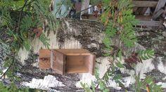 Oraville täytetään pähkinäautomaattiin omia herkkuja.