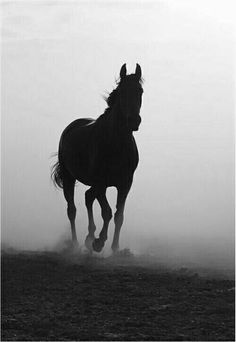 Black Horses, Dark Horse, Wild Horses, Beautiful Arabian Horses, Majestic Horse, Horse Background, All About Horses, Horse Drawings, Horse Pictures