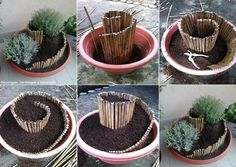 Idée pour une belle composition de plantes