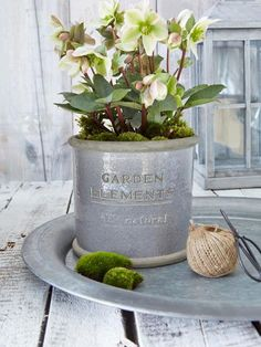 "Large Aged Flower Pot in Grey -- ""This flower pot would work equally well indoors or out I think! The decorative writing on the front, which reads 'Garden Elements', gives it an aged appearance, full of heaps of Scandi charm."" Nordic House"