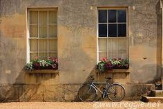 bicycles with flowers - Google Search