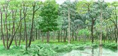 I colori di Conci- Conci's colours: Waterlogged forest-WWF panel