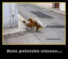 Naše politická situace... Image Editing, I Laughed, Haha, Jokes, Humor, Funny, Animals, Funny Dogs, Animales