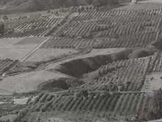 California Usa, Wines, Canada, History, Historia