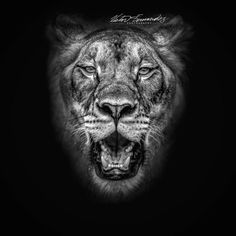 Lions can run at speeds of 50 mphnearly double the speed of some of the world's fastest humans. Find out why big cat populations in the wild are in decline and learn how you can help: http://ift.tt/2ep7LO6  #conservation #wildlife #wildlifephotography #animalkingdom #animals #bigcat #bigcats #africa  #lion #lioness #nikon #nikonnofilter #fineart #nikonphotography #photooftheday #monochrome #blackandwhitephotography #photography #animallover #catlover