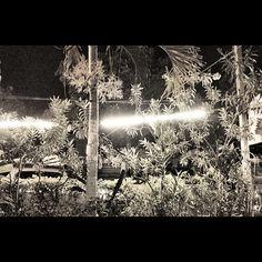 """@gabrielbeas's photo: """"Vegetación costa #pascuales #surf"""""""
