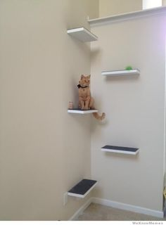 DIY cat perch. I could do this in the basement!