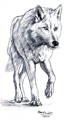 wolf drawing - Google zoeken