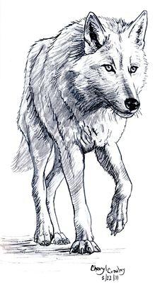 White Wolf by silvercrossfox.deviantart.com on @DeviantArt
