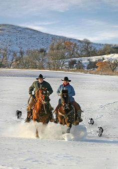 Cowboys , caballos y perros