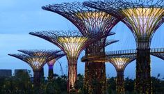 "'Supertrees' Super Useful in Singapore - Trees clean the air. They take in carbon dioxide, a climate-inducing greenhouse gas. They provide shade and thus keep forested areas cooler. They purify water. Giant man-made ""supertrees"" in Singapore will now provide electricity. The 18 fake trees, some nearly 165 feet tall, which were opened to visitors on June 29, make up a project from Singapore's National Parks Board called Gardens by the Bay,"