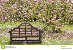 Lutyens Bench And Flowering Magnolia