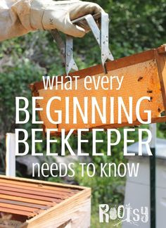 Learn what all beginning beekeepers need to know before they get bees. How to set up the apiary, where to buy bees, what beekeeping supplies are needed, and other beekeeping questions are answered in this article. How To Start Beekeeping, Beekeeping For Beginners, Beekeeping Supplies, Shade Grass, Raising Bees, Backyard Beekeeping, Worm Farm, Worm Composting, Vegetable Garden