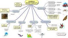 MAPPE per la SCUOLA: ANIMALI INVERTEBRATI