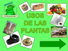 El Monstruito en Monteagudo: Usos de las plantas.