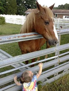 I never grew out of that 'little girl' love for horses~
