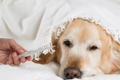 How To Take Your Pet's Temperature