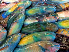 Parrot fish at the fish market Parrot Fish, Betta Fish, Images Esthétiques, Colorful Fish, Tropical Fish, Fish Art, Aesthetic Pictures, Art Inspo, Art Reference