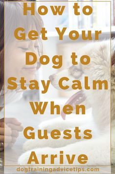 How to Get Your Dog to Stay Calm When Guests Arrive - Dog Obedience Training Tips - Hunde Training Your Puppy, Dog Training Tips, Agility Training, Potty Training, Training Classes, Crate Training, Training Videos, Training Schedule, Training Equipment