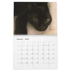 Katniss & Joakim Black Cats 2018 Calendar - cat cats kitten kitty pet love pussy