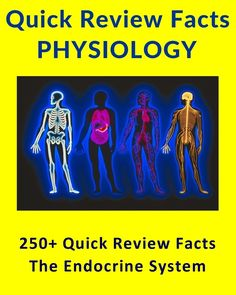 Ace your exams easy physics mnemonics physics nclex and students 250 quick review facts for science students the human endocrine system fandeluxe Images