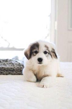 cute dog <3 #dog #cute #crueltyfree  www.vainpursuits.com