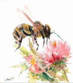 Honey Bee and Flower original watercolor painting by ORIGINALONLY, $38.00