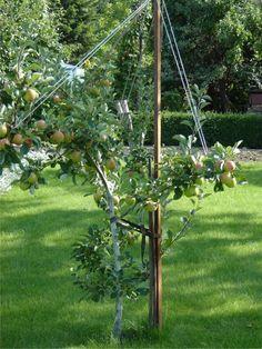 pielęgnacja drzew owocowych po posadzeniu