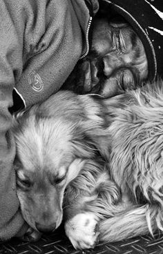 there is no creature that loves as unconditionally as a dog