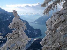 Blick durch die mit Schnee behangenen Bäume auf den Brienzersee und die Niesenkette