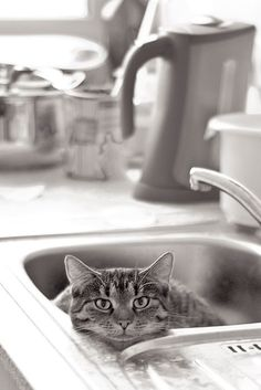 Hello. You don't need this, do you? (Kitty in the kitchen sink.)