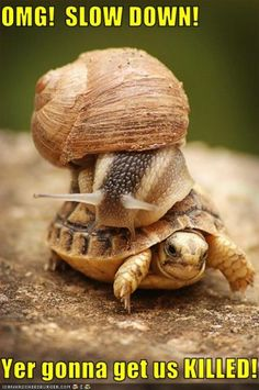 snail hitching a ride