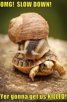 Sheesh, turtle--calm down!