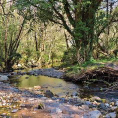 Knocksink Wood, Ireland.  #wicklow #enniskerry  #knocksink #summer #ireland #nature #amazing #awesome #woods #hiking #travel #instatravel #travelgram #tourism #vacation #traveling #trip