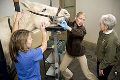 Equine dentistry experts
