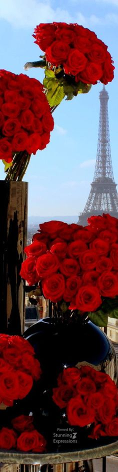 red roses and Eiffel Tower - Paris