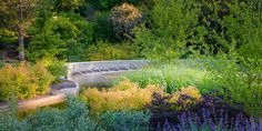 The signature garden of the Royal Botanical Gardens (RBG) located in Burlington, Ontario, Canada, is the David Braley and Nancy | Read More