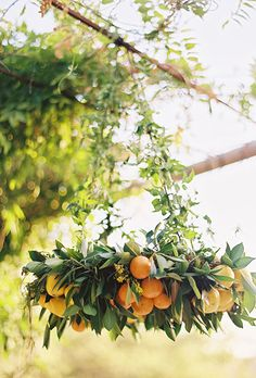Brides.com: . To complement the aesthetic of this California wedding, Heavenly Blooms created greenery chandeliers packed with citrus accents.