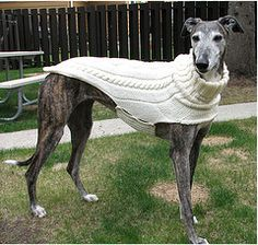 Ravelry: Side Button Greyhound Sweater pattern by Terri Lee Royea Knitted Dog Sweater Pattern, Knit Dog Sweater, Dog Sweaters, Greyhound Coat Pattern, Dog Coat Pattern, Dog Jumpers, Puppy Collars, Grey Hound Dog, Dog Coats
