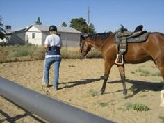Start with good ground manners - end with a safe horse!  proequinegrooms.com