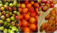 Μαρμελάδα κορόμηλο - η ζελεδένια | TasteFULL.gr Vegetables, Food, Veggies, Veggie Food, Meals, Vegetable Recipes, Yemek, Eten