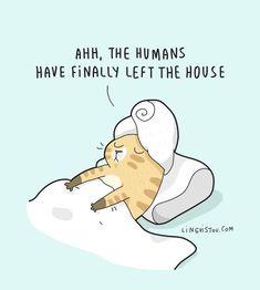 Relatable Cat Comics For Feline Owners & Appreciators - Memebase - Funny Memes Crazy Cat Lady, Crazy Cats, Funny Cute, Hilarious, Funny Doodles, Cat Comics, Funny Comics, Cat Quotes, Girl Quotes